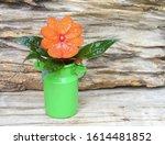 Red Orange Flower  Impatiens...