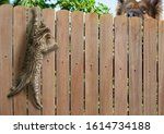 Funny Kitten Hanging On Fence...