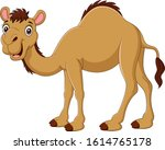 Cartoon Camel Isolated On Whit...