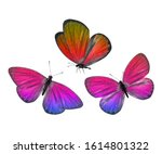 Three Multi Colored Butterflie...