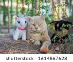 editorial use only  a cat and... | Shutterstock . vector #1614867628