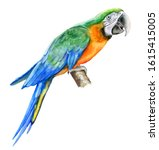 Harlequin Macaw  Green Parrot...