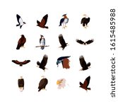 eagles birds set design  animal ... | Shutterstock .eps vector #1615485988