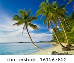 green getaway coconut coast  | Shutterstock . vector #161567852