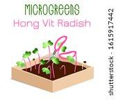 microgreens hong vit radish.... | Shutterstock .eps vector #1615917442