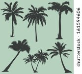vector set of  palms... | Shutterstock .eps vector #161594606