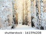 Winter Frozen Birch Woods In...