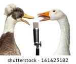 Duck And Goose Singing Into A...