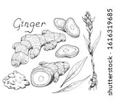 Ginger Root. Asian Chinese...