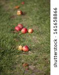 Close Up Of Red Apples Which...