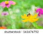 Yellow Flower And Bee Show...