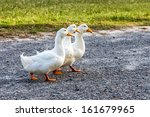 Are Your Ducks In A Row
