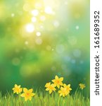vector of daffodil flowers on... | Shutterstock .eps vector #161689352