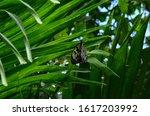 Habitat Butterflies...