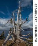 Small photo of Ancient dead tree acting as a sentinel on the rim of Crater Lake in the National Park
