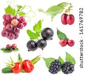 collection of fruit and berry... | Shutterstock . vector #161769782