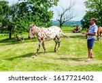Man training and walking with his horse on the green meadow.Beautiful animal and cowboy on ranch enjoy time together,preparing for riding - stock photo