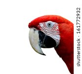 Head Of Red And Green Macaw...