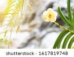 orchid flower on beautiful... | Shutterstock . vector #1617819748