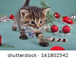 cute little kitten wearing a... | Shutterstock . vector #161802542
