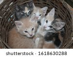 Four Adorable Barn Cats...