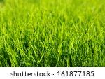 background of a green grass | Shutterstock . vector #161877185