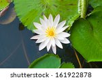 Top View Water Lily And Leaves...