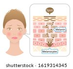human skin layer with facial... | Shutterstock .eps vector #1619314345