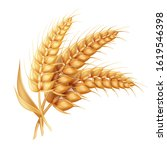barley ear with leaves... | Shutterstock . vector #1619546398