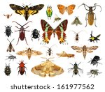 set of insects on white... | Shutterstock . vector #161977562