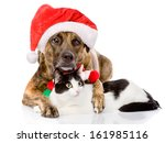 Cat And Dog With Santa Claus...
