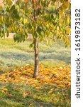 Fallen Leaves Concept. Autumn...