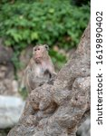 Small photo of Monkeys in tourist places. Dangerous animals. Aggressive monkeys. Travel dangers