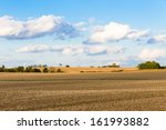 Monoculture Corn Fields Of...