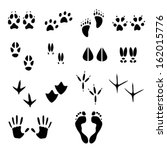 Tracks Of Wild Animals And Birds