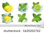 collection of fresh mint and... | Shutterstock .eps vector #1620202762