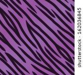 a violet tiger striped... | Shutterstock .eps vector #162036845