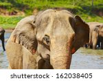 elephants are walking in the... | Shutterstock . vector #162038405