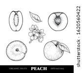 Vector Peaches Hand Drawn...