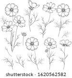 set of linum flower elements.... | Shutterstock .eps vector #1620562582