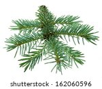 fir branch isolated on white... | Shutterstock . vector #162060596
