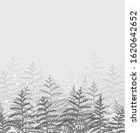 vector illustration of bracken. ... | Shutterstock .eps vector #1620642652
