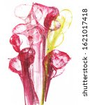 art abstract flowers .hand...   Shutterstock . vector #1621017418