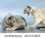 angry peterbald and blue...   Shutterstock . vector #162121832