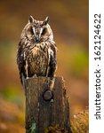 Long Eared Owl Against A...