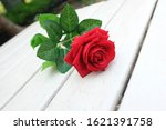 Fresh Red Rose Flower On The...