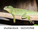 green water dragon or... | Shutterstock . vector #162141968