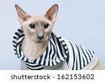 shorthair oriental cat ... | Shutterstock . vector #162153602