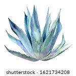 Whole Agave Plant. Blue Exotic...