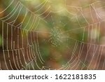Strands of a Spider Web in Middlebarrow Wood,  Silverdale, Lancashire